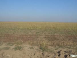 Teren agricol Braila 340 ha(arendez)