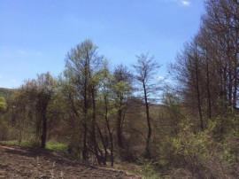 Proprietar, teren intravilan Valea Ursului 1283mp