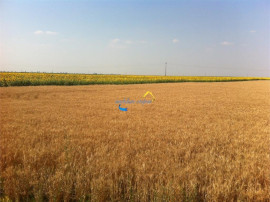 Teren agricol dolj