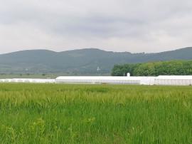 Spațiu Industrial - Sera legume, Branisca, jud. Hunedoara