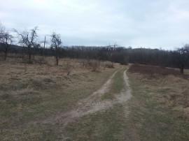 ID:10513: Teren agricol, Dedulesti, Varzaru
