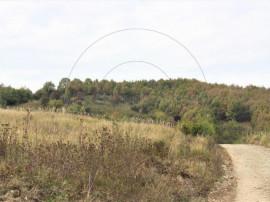 Teren stefanesti, valea mare-podgoria 2517mp