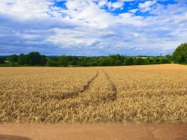 Teren agricol 23 ha