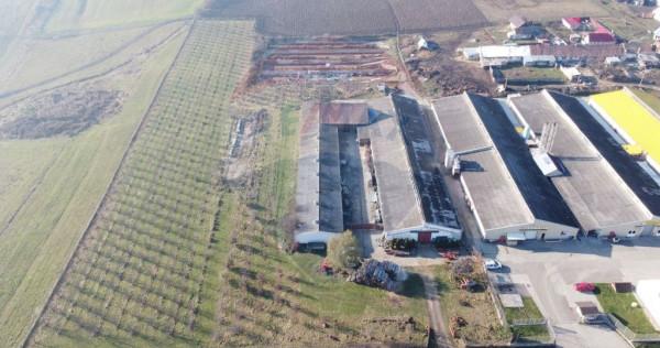 Fermă cu livadă-grajduri-teren agricol de vânzare/Măi...