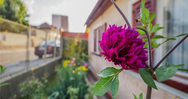 Casuta ospitaliera cu gradina proprie, Brasov