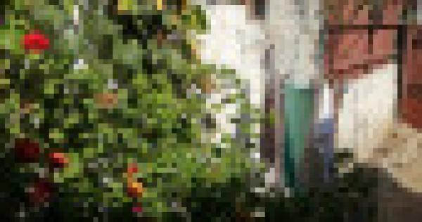 Casă bătrânească în București sectorul 2 Pantelimon