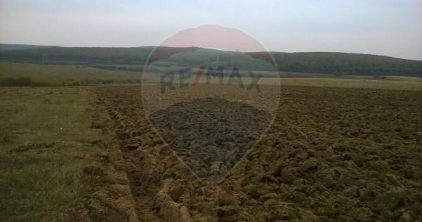 Teren agricol Gerăușa ( Ardud )24,35 hectare