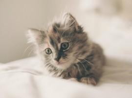 Pisici jucăușe